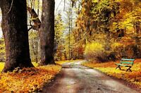 Autumn Forest Trees Park Leaves Home Wall Art Large Poster & Canvas Pictures