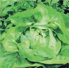 Vegetable Lettuce Large Webbs Wonderful 7500 Seeds