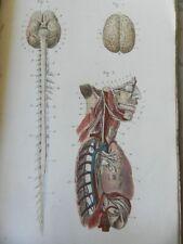 ******* RARE : ANTHROPOLOGIE - ATLAS DE PLANCHES EN COULEURS - A. BOSSU - 1851 *