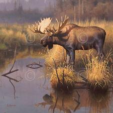 MOOSE ART PRINT - Bull Moose by Greg Alexander 32x32 Wildlife Hunting Poster