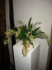 Oncidium´ Blanco STARS ´Fragancia con blütentrieben Orquídea Orquídeas