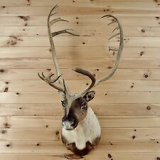 Barren Ground Caribou Taxidermy Mount - SW5068 - Lodge Decor for Sale