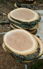 "5 Pc 11""to12""Oak oval Slices Wood Disk Rustic Wedding Centerpiece Coaster SALE !"