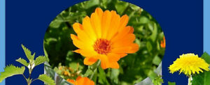 20x HERBAL Teabags Nettle Calendula Dandelion Root Healthy Naturally Detox liver
