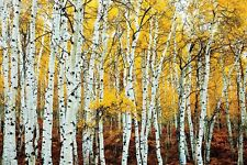 ASPEN YELLOW GROVE - SCENIC POSTER 24x36 - NATURE TREES 890