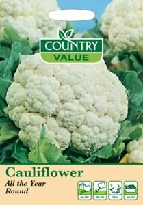 Cauliflower All The Year Round Seeds (175) Country Value by My Fothergill's