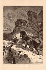 CHIENS DU MONT SAINT BERNARD DOGS SUISSE SCHWEIZ IMAGE 1912 OLD PRINT