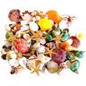 135 PCS Mini Sea Shells Mixed Beach Seashells Starfish, Colorful Natural Seas...