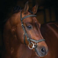 Horseware Rambo MICKLEM DELUXE Competition Bridle FEI Approved Black/Brown P/C/F