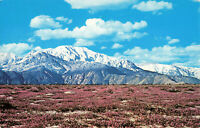 Postcard Desert Verbina