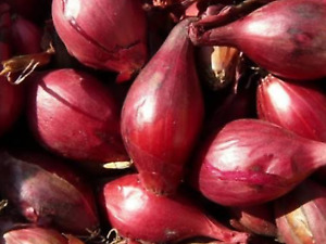 """Onion Seeds """"Tropea Long Red""""(Approx 150 Seeds),Excellent Garden Vegetable"""