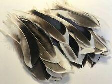 BULK 50 Natural Duck Mallard 10-15cm Feathers DIY Craft Millinery Smudge Fan