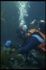 156017 Underwater Photographer In California Kelp Bed A4 Photo Print