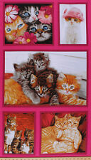 "23.5"" X 44"" Panel Cat Crazy Cats Kittens Animals Cotton Fabric Panel D575.57"