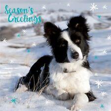 LUXURY Christmas Cards Pack 10 Border Collie Snow Scene | Sheepdog Xmas Cards