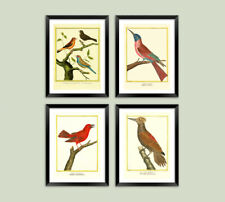 VINTAGE BIRD PRINTS: Victorian Ornithology Illustrations