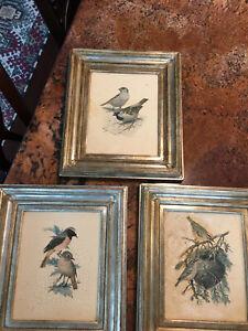Vintage Bird Print Art Set of 3 Framed Prints Designer Curated