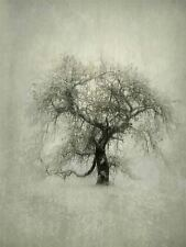 ART PRINT POSTER PHOTO TREE WINTER BARE BRANCHES SNOW COLD FROZEN LFMP0338