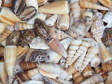 SEASHELLS MIXED PACK 500g . Beach home coastal decor. Art Craft wedding