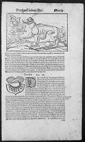 1598 Sebastian. Munster Antique Print Text & Engravings of Large Cat of Iran