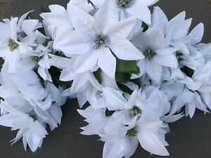 WHITE POINSETTIA BUNCHES X 8 ARTIFICIAL FLOWERS X56 Heads  JOB LOT WHOLESALE