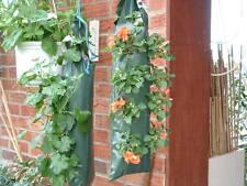 Appendere Fiori fragole Fioriere Giardino Pensile Fiore piante piante di biancheria da letto