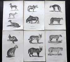 George Shaw C1805 Lot of 12 Antique Natural History Prints. Book Plates