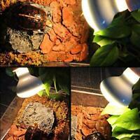 Reptile Lamp Turtle Basking UV Lamps Heating Lamp Amphibian Terrarium T1Y5