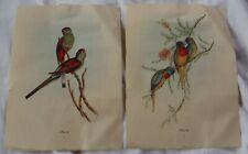 2 VINTAGE BIRDS PARROTS PICTURE J GOULD 9 x 12  #605 #609
