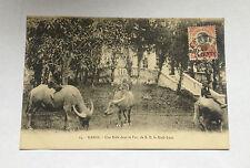 CPA TONKIN HANOI Parc S.E. le Kinh-Luoc enfants et vaches Carte Buffalo Postcard