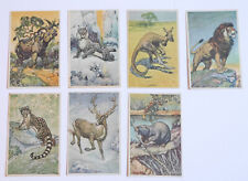 1920's D12 Bell Bread Beautiful Animals Lot of 7 different