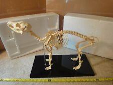 Small dog skeleton model. Veterinary medicine anatomical education, Taxidermy