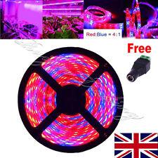 12V 5M SMD 5050 Red Blue 4:1 LED Plant Growing Hydroponic Light Strip Aquarium