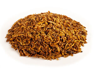 Crunchy Critters edible insects bugs a pint of Mixed critters