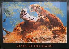CLASH OF THE TIGERS POSTER, BENGAL TIGERS (E6)