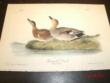 AUDUBON'S BIRDS of AMERICA - GADWALL DUCK - First Edition Octavo Plate 388