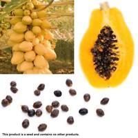 100 stücke True Dwarf Bio Süße Papaya Samen Bonsai Essbare Obst Pflanze Süße