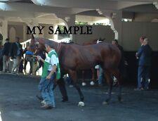 AMERICAN PHAROAH BELMONT STAKES TRIPLE CROWN HORSE RACE 8 x 10 PADDOCK PHOTO #4
