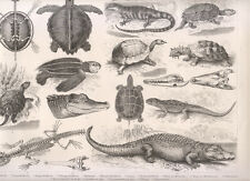 Tavola zoologica, 1850 xilografia  Tartaruga, coccodrillo,...