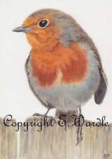 """ACEO Print of Watercolour 'Watching You' Robin Bird 2.5"""" X 3.5"""" By E.Wardle"""