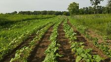 Green Earths 3 Row Vacuum Planter Easy To Useeasy To Handleeasy To Maintain
