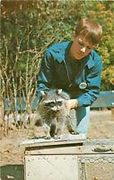 Postcard Raccoon, Gobblers Knob Zoo, Parke County, IN
