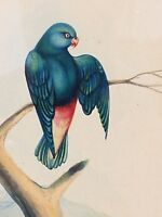 Antique Fine Quality Watercolor Bird on a Branch