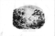 Stampa antica ISOLA MADRE sul Lago Maggiore 1885 Old print