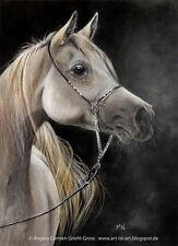 White Arabian Horse Original Colored Pencil Art by Artist A.C. GRIEHL-GROSS