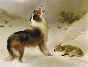 "COLLIE Sheltie Dog FOUND Lamb SHEPHERD'S CALL Giclee Art Print - LARGE 19"" x 13"""