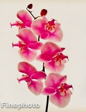 1980 Vintage 11x14 FLOWER Botanical Art ORCHID Photo Litho Plate By IRVING PENN