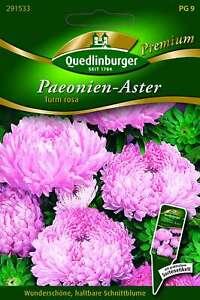 Saatgut - Samen Astern Paeonien- Turm rosa 291533 Quedlinburger AR5584