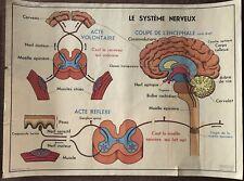 Ancienne affiche scolaire La Peau Le Toucher / Le Système Nerveux j Anscombre