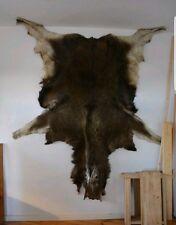 Soft Tanned Moose Hide Complete With Head Moose Deer Rug Fur Pelt Taxidermy